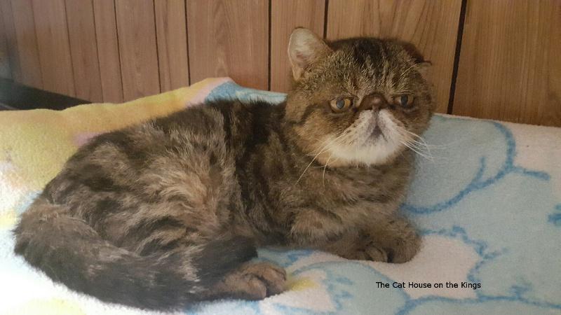 cat breeds images