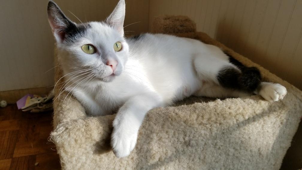 Aegean Cat Personality