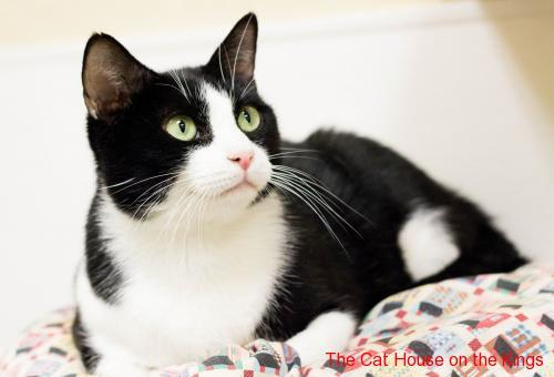 Picture Of A Cat In Shelter