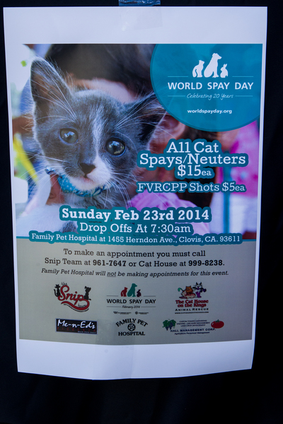 World Spay Day - Click to enlarge