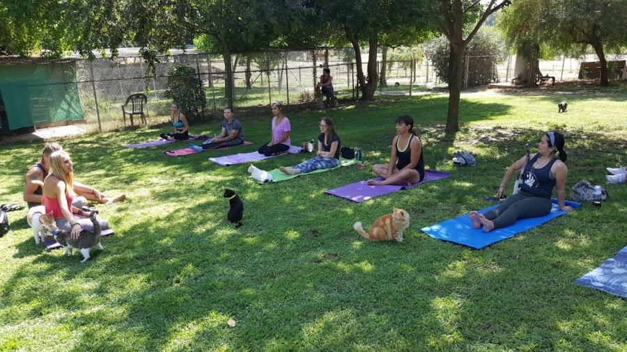 Boho Beautiful Yoga Event, September 16th 2017