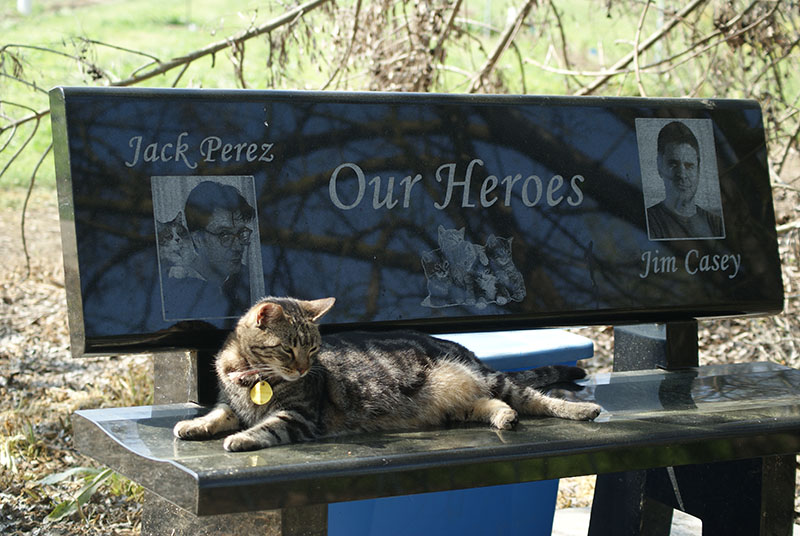Heroes Bench - Click to enlarge