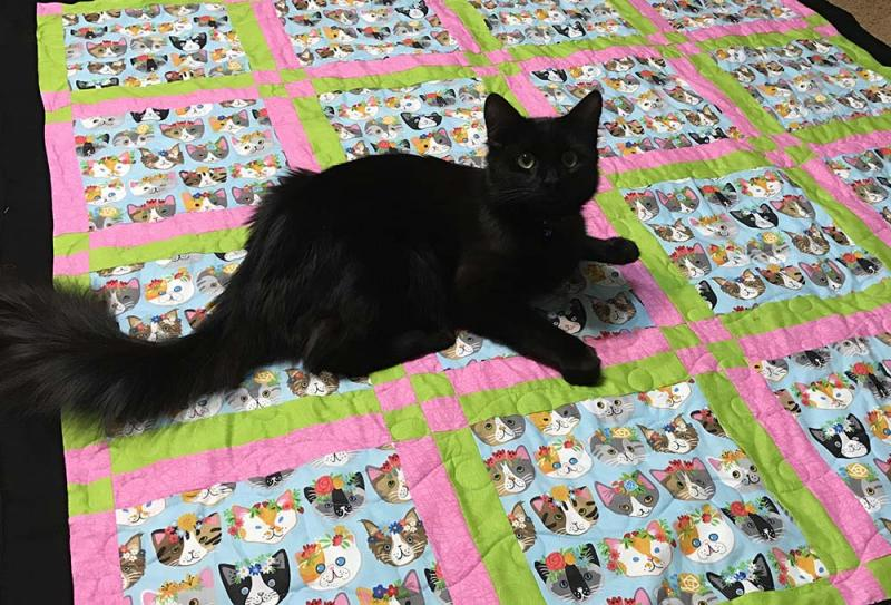 Kitten Quilt - Click to enlarge