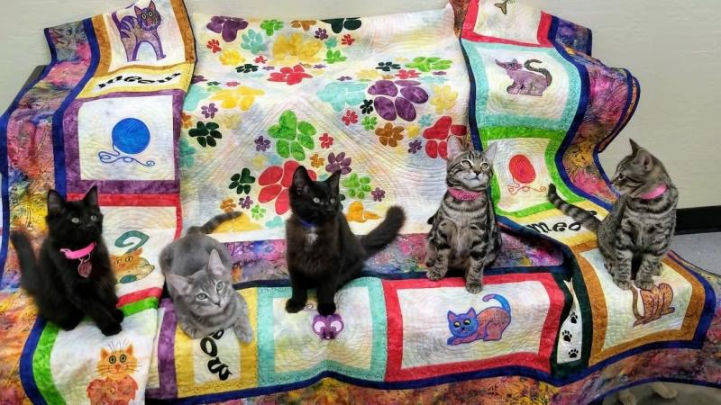 Multicolored Cat Quilt - Click to enlarge