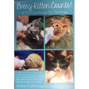 Every Kitten Counts Magnets